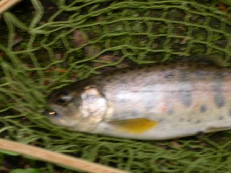 Yukawa060316