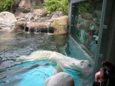Zoo34