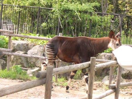 Zoo43