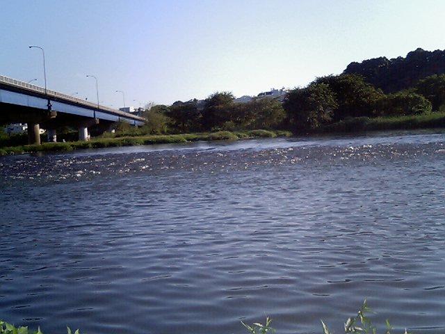 涼みに河原に