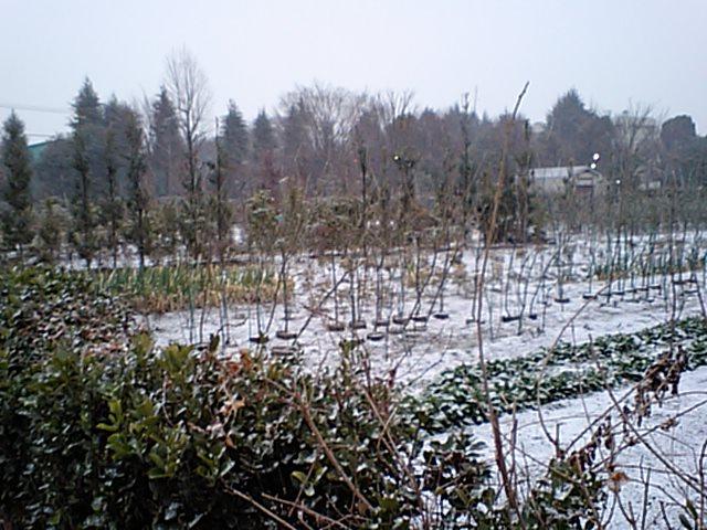 雪を見て口ずさむ歌