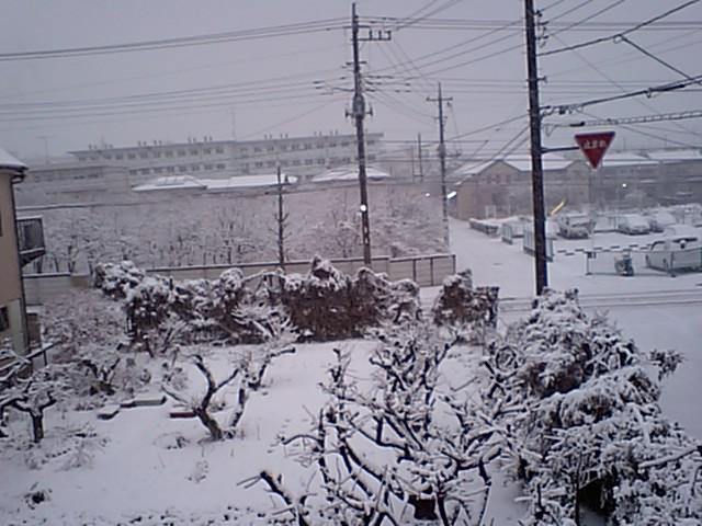 外は白い雪の…
