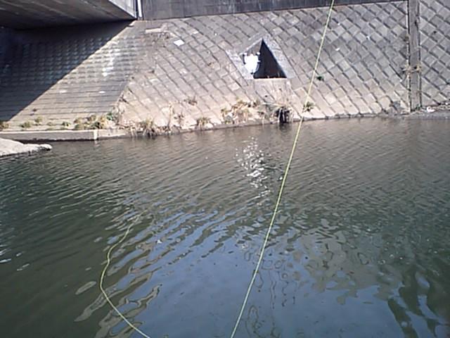 今日の鯉釣り