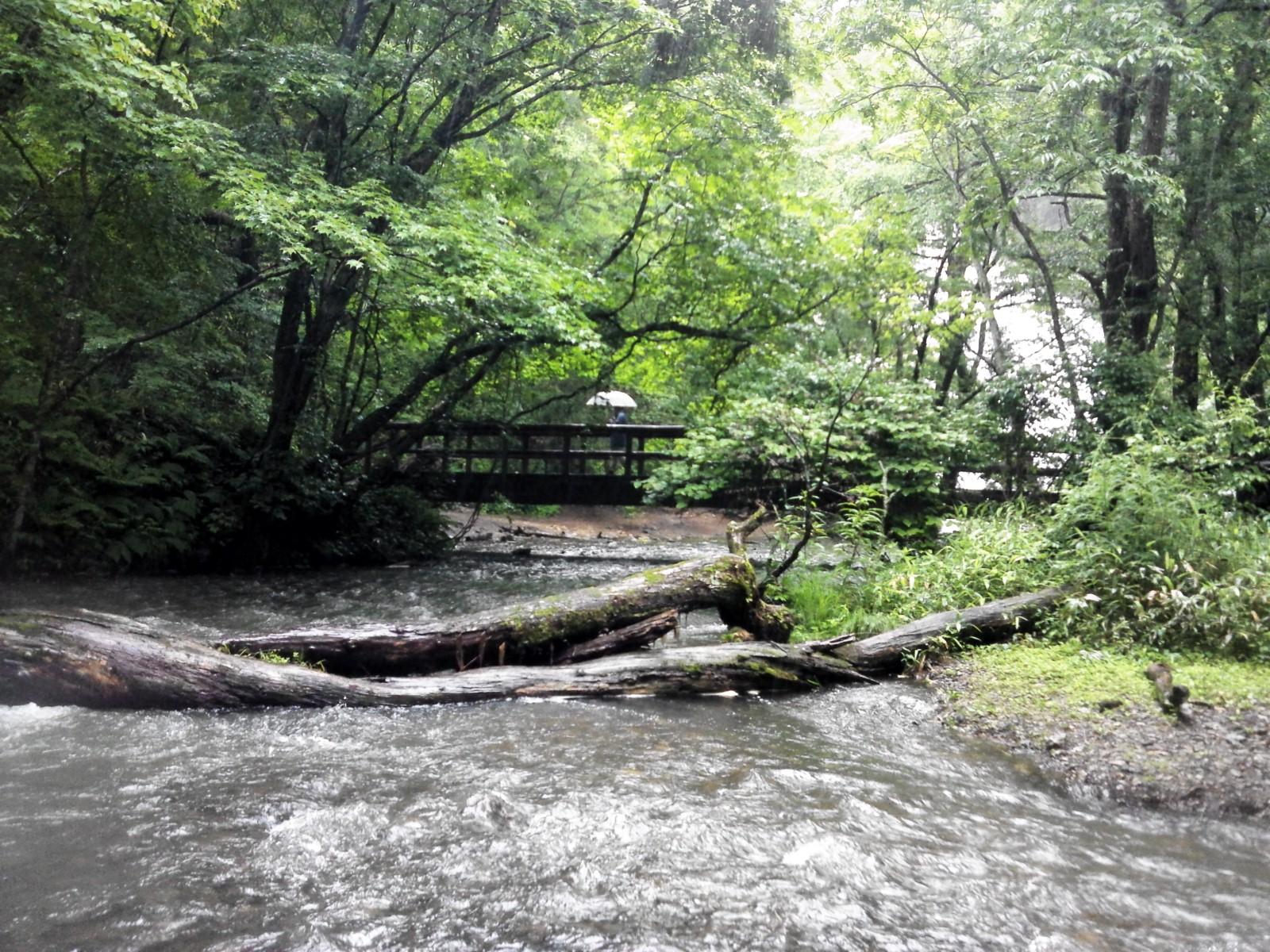 20120708−増水大雨の湯川にて