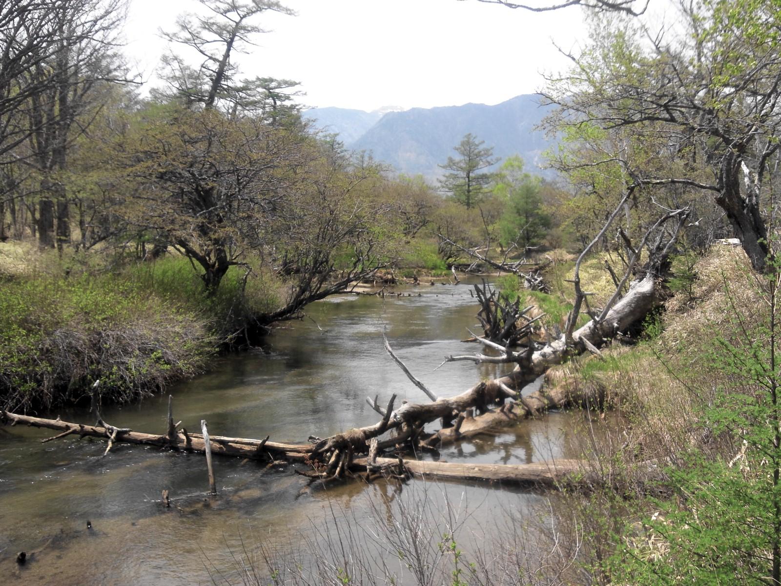 今年初の湯川