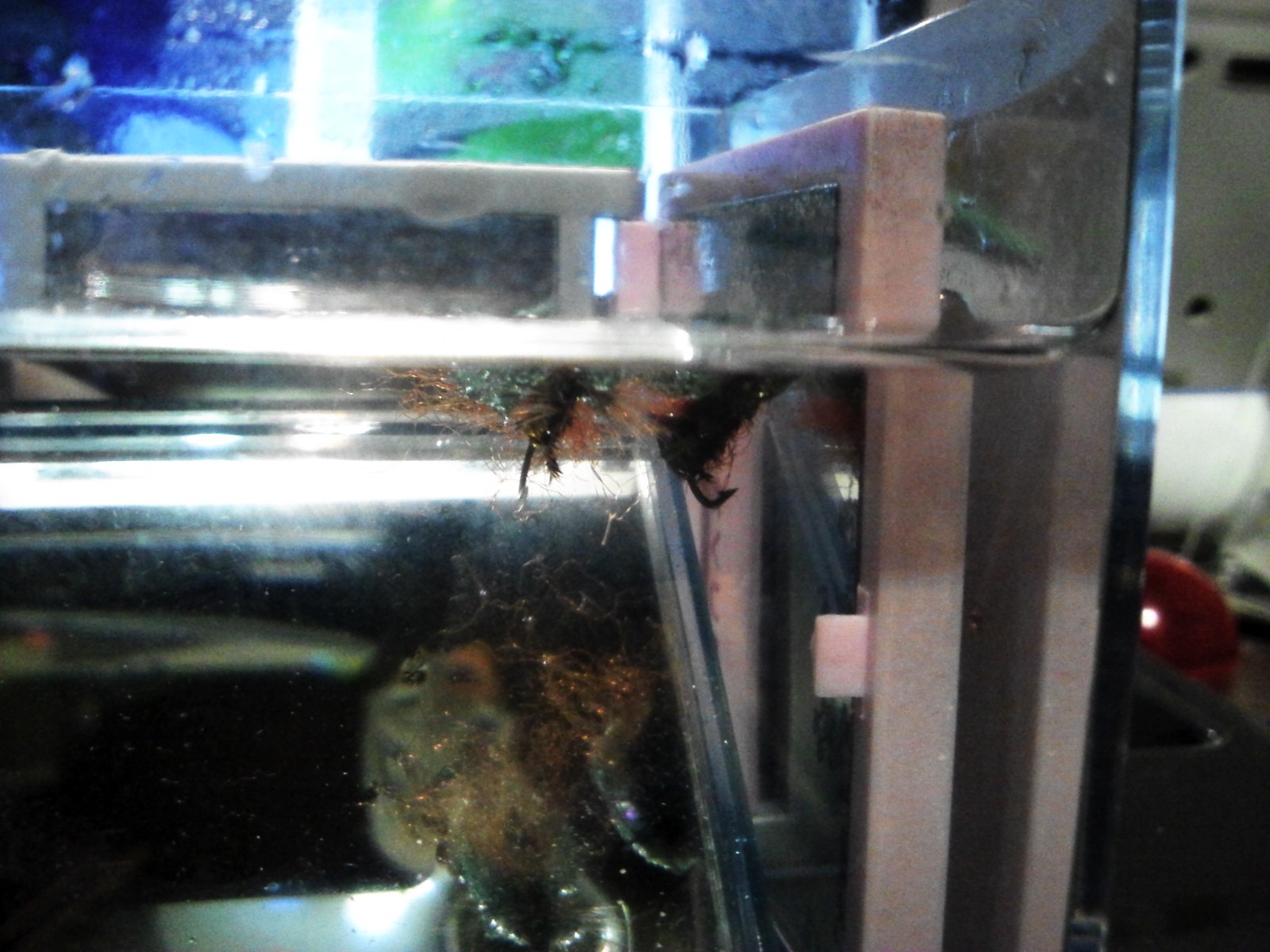 甲虫フライ
