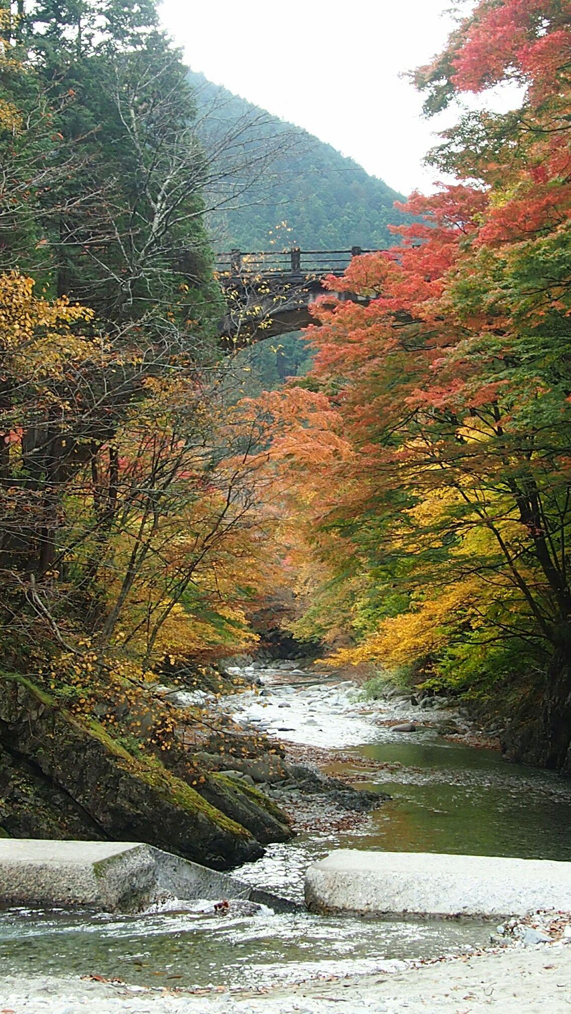 大芦川の紅葉2014