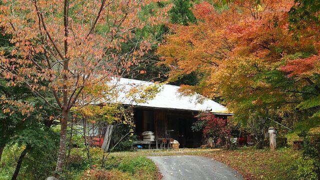 大芦川の紅葉その2