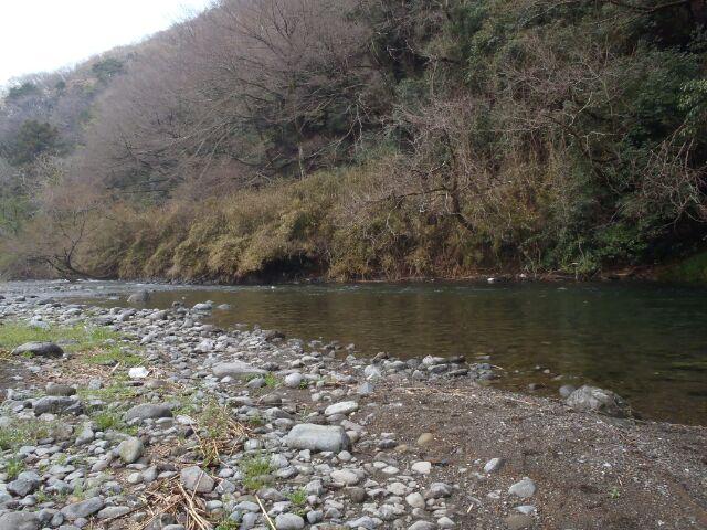 近所の川を徘徊