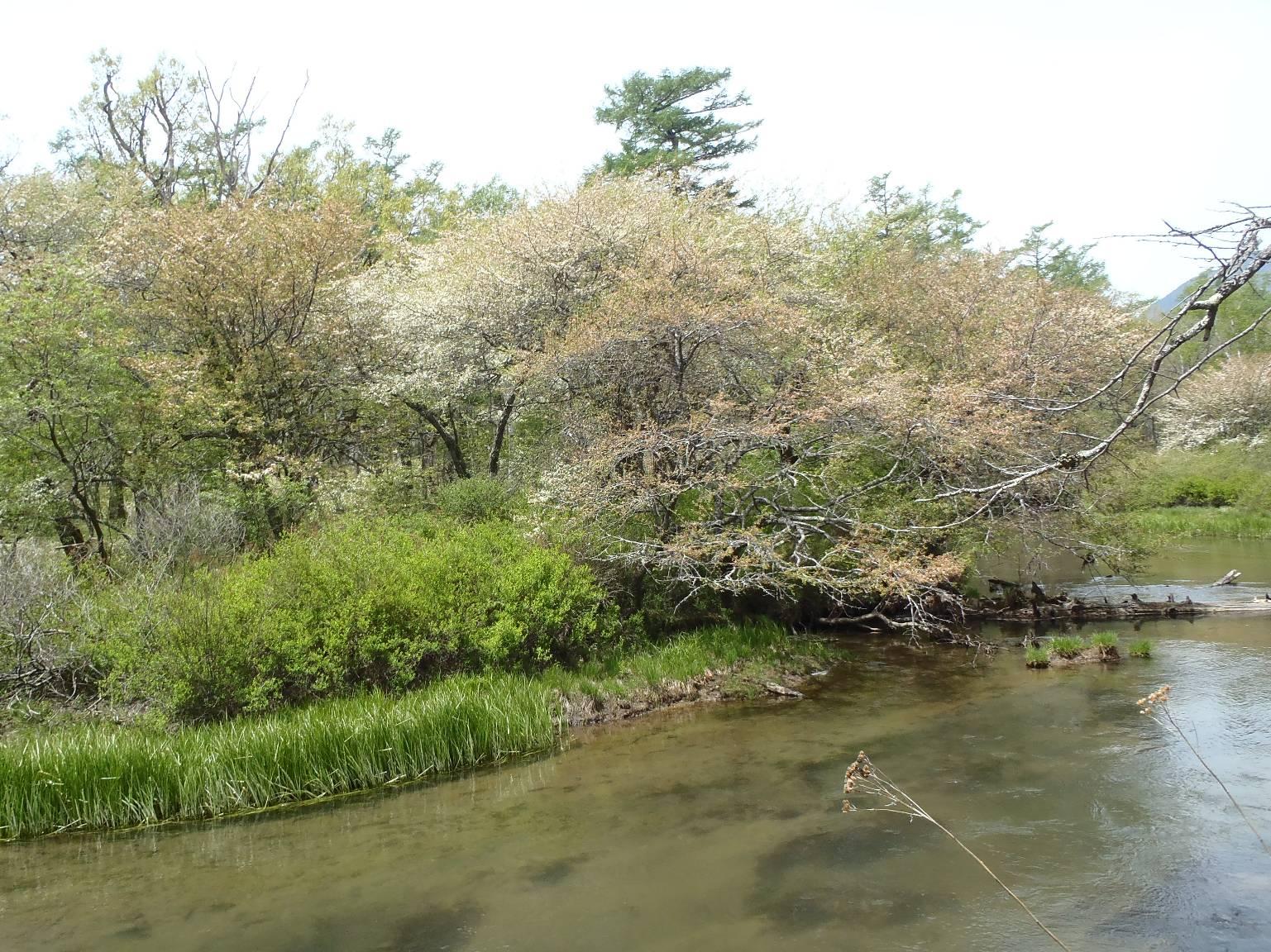 2018/05/26湯川に