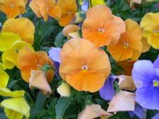 Flower0000