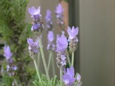 Flower0003