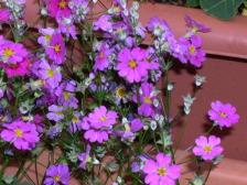 Flower0006