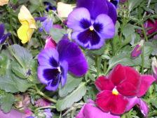 Flower0007