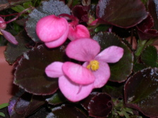Flower0010_1